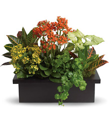 Blooming Plant Assortment from Schultz Florists, flower delivery in Chicago