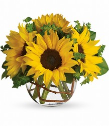 Sunny Sunflowers from Schultz Florists, flower delivery in Chicago