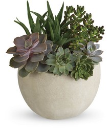 Desert Beauty Succulent Garden from Schultz Florists, flower delivery in Chicago